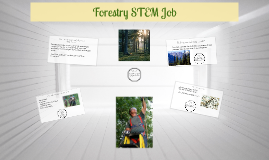 Forestry STEM Job
