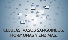 CÉLULAS, VASOS SANGUÍNEOS, HORMONAS Y ENZIMAS.
