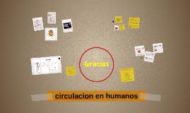 circulacion en humanos