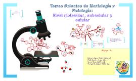 Nivel molecular, subcelular y celular