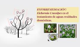 FITORREMEDIACIÓN: Eichornia Crassipes