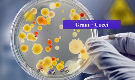 Gram + Cocci