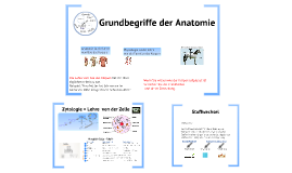 Copy of Grundbegriffe Anatomie