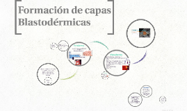 Copy of Formacion de capas Blastodermicas