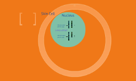 Copy of Into the Cells Nucleus
