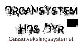 Organsystemer hos dyr. Gassutveksling