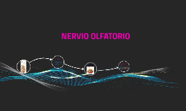Copy of NERVIO OLFATORIO