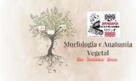 Morfologia e Anatomia Vegetal