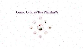 Como Cuidas Tus Plantas??