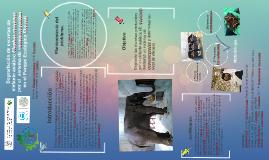 Degradación de excretas de elefante asiático Elephas maximus