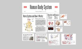 Human Body System: Nerve System