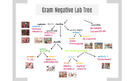 Gram Negative Bacteria Tree