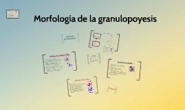 Morfología de la granulopoyésis