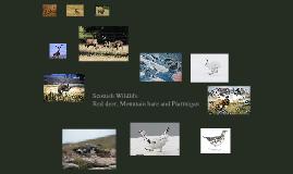 Copy of Scottish Wildlife