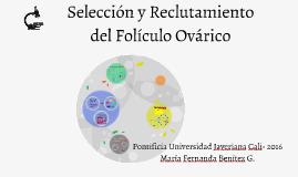 Copy of Selección y Reclutamiento del Folículo Ovárico