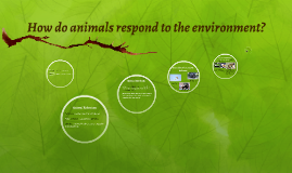 Copy of How do animals respond to the environment?
