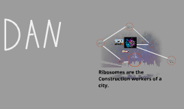 Ribosomes are the Construction workers of a city.
