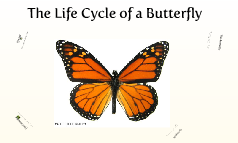 Science - Butterfly Life cycle