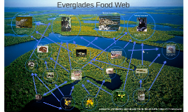 Difference Between Food Chain Food Web Lesson For Kids in addition Everglades Food Web in addition 7994253 moreover Detail additionally 510736413965696557. on decomposers in everglades