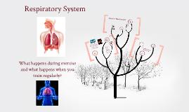 EDEXCEL GCSE The Respiratory System