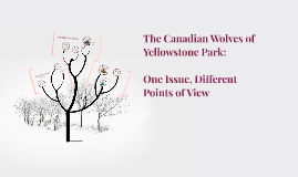 The Canadian Wolves of