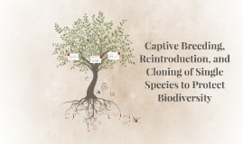 Captive Breeding, Reintroduction, and Cloning of Single Spec
