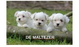 MALTEZER