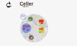 Copy of Celler