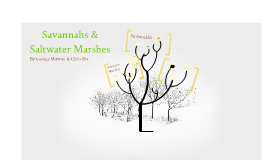 Tropical Grasslands & Saltwater Marshes