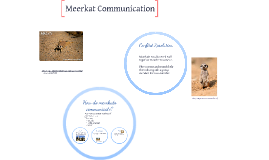 Copy of How do meerkats communicate?