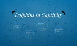 History of Dolphin Captivity
