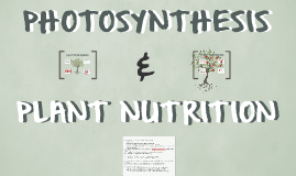 Photosynthesis and Plant Nutrition