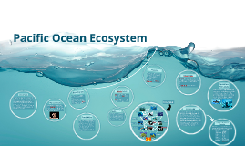Copy of Pacific Ocean Ecosystem