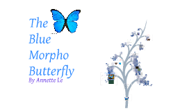 Copy of The Blue Morpho Butterfly Science presentation