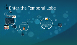 Enter the Temporal Lobe