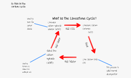 Copy of The Limestone Reaction Cycle. By Claudia Rowarth