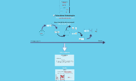PRÄSENTATION - MSA - 4.Prüfungsfach