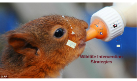 Wildlife Intervention Strategies