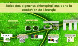 Rôles des pigments chlorophylliens dans la captation de l'én