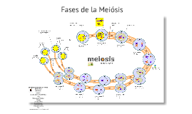 Copy of Copy of Reproducción Celular  (Meiosis)