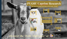 PVAMU Goat Research
