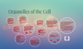 Organelles of the Cell