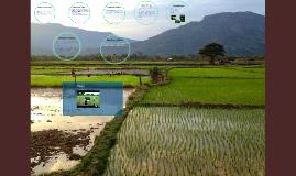 Sekong Province Laos PDR, Greenhouses