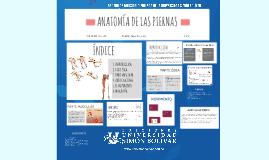 Copy of ANATOMÍA DE LA PIERNA