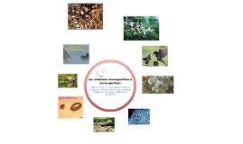 Copy of Relaciones intraespecificas e interespecificas