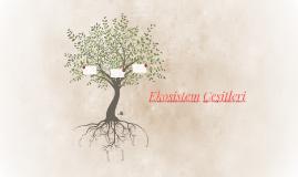 Ekosistem Çeşitleri