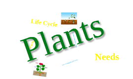 Copy of Plants