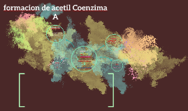 ¨Formación de acetil coenzima A¨