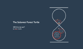 The Suluwesi Forest Turtle