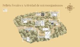Pellets Fecales y actividad de microorganismos